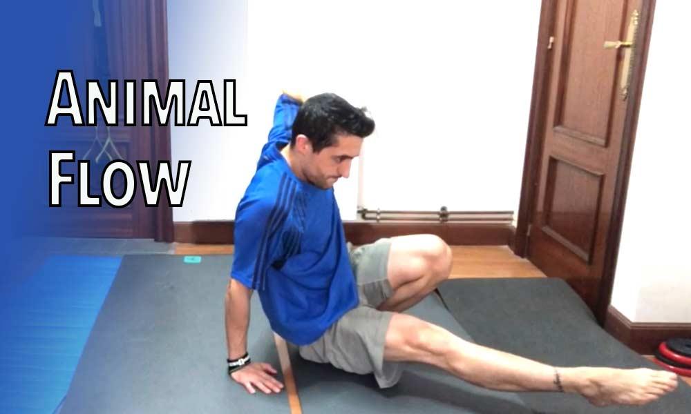 animal flow movimientos clase gratuita